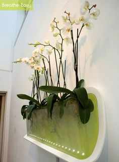 """Breathe Easy is an aeroponic growing system designed to improve home air quality. It utilizes toxin absorbing plants that clean the air and add humidity. """"Phalaenopis (moth orchid) is weel suited for the bedroom as its one of the few plants that produce oxygen at night, likes shady environments, flowers for long periods, etc....""""."""