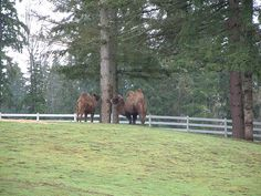 The camels by Manchester State Park in Port Orchard, Washington
