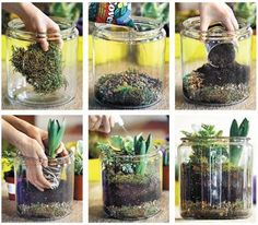 To know more about diy plant terrarium by nicole cammorata of scarlet and sterling, visit Sumally, a social network that gathers together all the wanted things in the world! Garden Terrarium, Succulent Terrarium, Planting Succulents, Garden Plants, Planting Flowers, Terrarium Ideas, Succulent Centerpieces, Party Centerpieces, Indoor Garden