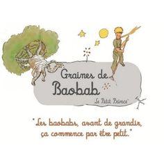 8 Graines de Baobab Le Petit Prince