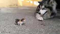 Tiny Kitten Makes Its way