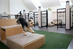 HOTEL PRO PSY Pet Shop, Dog Kennel Panels, Luxury Dog Kennels, Dog Kennel Designs, Pet Hotel, Haunted Hotel, Hotels And Resorts, Most Beautiful Pictures, Pets