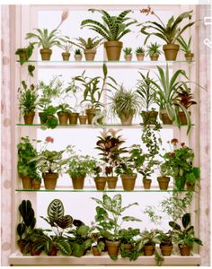Idea for organizing indoor plants