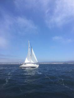 32 reaching. Humpbacks all over the bay. 18-20 kts wind, 3-4' seas