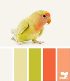 feathered color - color scheme for the bedroom? - Click image to find more hot Pinterest pins