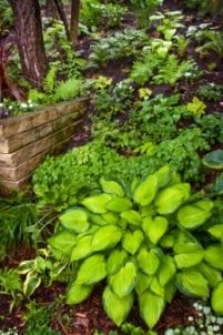 HOW TO; SHADE GARDENS ~Learn about light and shade in gardens...    Shady spots needn't be a problem - learn how to transform them into luscious, green gardens that 'wow'!
