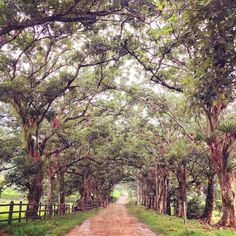 Countryside, Campo, Landscape, Paisaje, Trees, Árboles, Nature, Naturaleza, Barbosa, Antioquia, Colombia