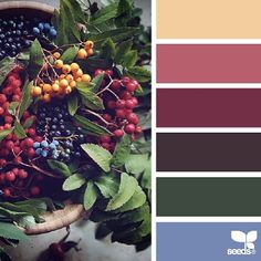 today's inspiration image for { color picks } is by @_ewabakrac ... thank you Ewa for another *incredible* #SeedsColor photo share!