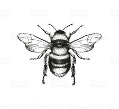 Vector engraving illustration of honey bee on white background Top 60 Honey Bee Clip Art, Vector Graphics and Illustrations - iStock<br> Vector engraving illustration of honey bee on white background Kunst Tattoos, Body Art Tattoos, Tattoo Drawings, Small Tattoos, Tatoos, Hand Tattoos, Sleeve Tattoos, Honey Bee Tattoo, Bumble Bee Tattoo