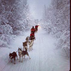 Lapland Safaris! Saariselkä activities http://www.saariselka.com/individual/activities