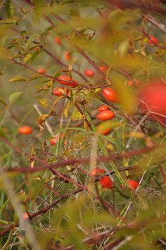 formfreu.de » Herbstmorgen @ Tempelhofer Park