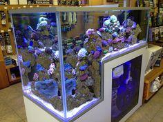 - Page 2 - Reef Central Online Community Aquarium Stand, Aquarium Kit, Home Aquarium, Aquarium Design, Marine Aquarium, Reef Aquarium, Saltwater Aquarium Fish, Saltwater Tank, Freshwater Aquarium