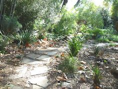Like the pathway.