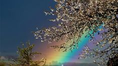 The Rainbow Poem by Regina Garson