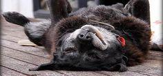 Lo sapete che oggi adottare un cane anziano, oltre ad essere un'azione che fa guadagnare il paradiso subito subito, può addirittura farvi risparmiare? #adozione #animali #pets http://paperproject.it/rubriche/animali/il-diario-di-pu/tu-lo-adotti-lui-mangia-gratis/