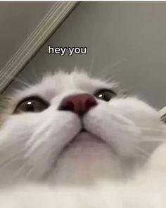 Cute Cat Memes, Funny Animal Jokes, Cute Funny Animals, Funny Animal Pictures, Animal Memes, Funny Cute, Haha Funny, Funny Video Memes, Funny Cat Videos