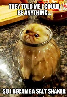 Attack Of The Funny Animal Pictures - 38 Pics - Dump A Day