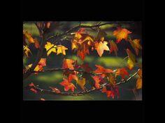 Karrin Allyson - Autumn leaves