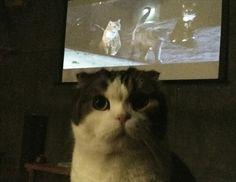 猫と一緒に映画をみる夜 吉祥寺ねこ祭りの「猫だらけ映画上映会」がネコネコしくてうらやましい