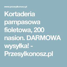 Kortaderia pampasowa fioletowa, 200 nasion. DARMOWA wysyłka!   - Przesylkonosz.pl