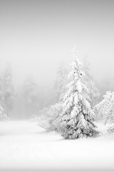 Stand out in the cold. Germany by Susu_tD