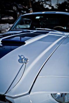 Mustang GT500CR   http://lecamusalbert.tumblr.com/   #Cars #Speed #HotRod