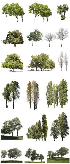 18 Tree PNG images, with transparent background, ready to dowload and use in photoshop. Coupes Architecture, Landscape Architecture Design, Architecture Graphics, Architecture Drawings, Architecture Plan, Photoshop Png, Tree Photoshop, Architectural Trees, Tree Sketches