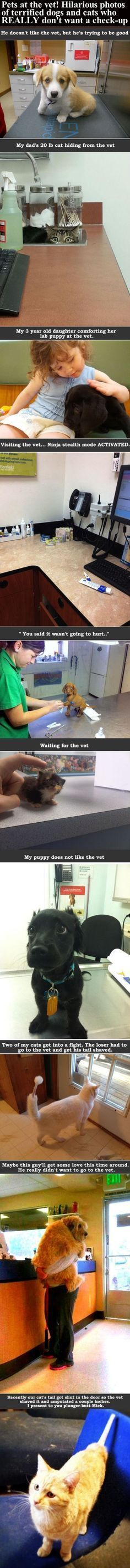 Pets At The Vet! Hilarious Photos Of Terrified Dogs And Cats Who Really Don't Want A Check-Up cute animals dogs cat cats adorable dog puppy animal pets kitten funny animals funny pets funny cats funny dogs #catsfunnylife #catsanddogsfunny
