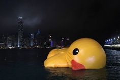 Hong Kong rubber duck sinks :(
