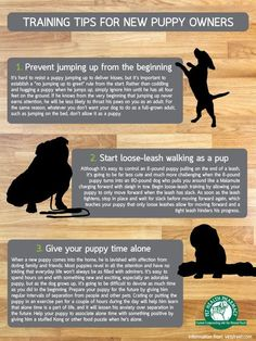 Puppies need naps the same as babies. Quite a few of our past puppies have created wonderful service and therapy dogs too. Possessing a new puppy is a rather intriguing and enjoyable experience for…More Puppy Training Tips, Training Your Dog, Potty Training, Training Pads, Training Collar, Crate Training, Cesar Millan Puppy Training, Pa Training, Kennel Training A Puppy