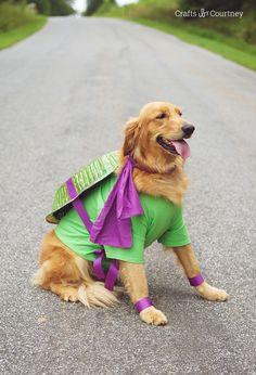 Hallowen Ideas: Fun Teenage Mutant Ninja Turtle Dog Costume