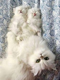 Have you met my darling balls of fluff?