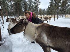 Meeting a reindeer