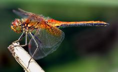 About us – The Dragonfly Central