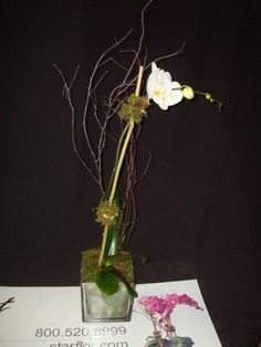 A single white phalaneopsis orchid.   To view our entire selection please visit us at www.starflor.com  #flowers #events #eventdecor