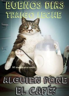 Humor Train - Funny Pictures, Pic Dumps, Animals and GIFs. Funny Cats, Funny Animals, Cute Animals, Baby Animals, Wild Animals, Fat Cats, Cats And Kittens, I Love Cats, Crazy Cats