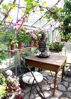 Landet Krokus: I Bikas förunderliga trädgård