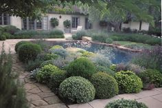love the rounded mounds of foliage