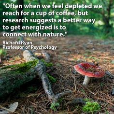 """#treefacts (Quote from """"Spending Time in Nature Makes People Feel More Alive, Study Shows"""" via Rochester University)"""