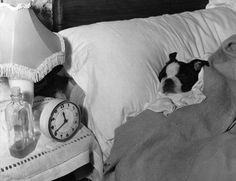 Exactly what my boston terrier does...