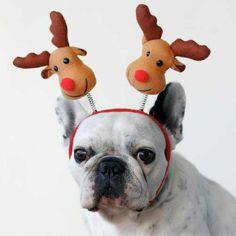 I've Got Reindeers On My Mind | Cutest Paw