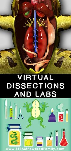 Virtual dissections can be a huge help in teaching science, biology, physiology and anatomy. Here are some of the best resources for your virtual lessons and labs. life science Virtual Dissections - All the learning, no mess or stress Biology College, Biology Classroom, High School Biology, Biology Teacher, Science Biology, Teaching Biology, Science Education, Science For Kids, College Teaching