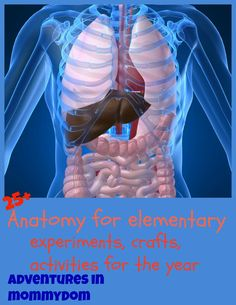 anatomy ideas for elementary