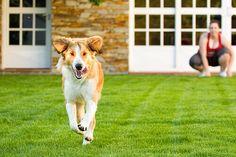 Molto spesso si pensa all'esercizio fisico dei cani come ad uno stimolo per prevenire l'insorgere di problemi di salute