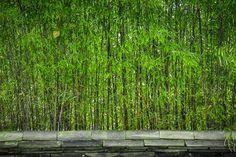 Pas de garantie pour les toits verts | CondoLegal