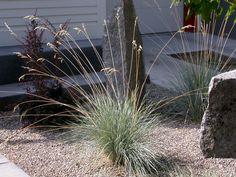 15 sziklakerti növény, mellyel beültetheted a sziklakertet!