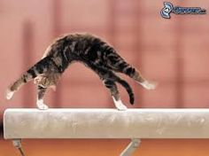 This is what happens if you are a gymnast and have a cat.