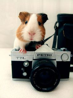 adorable. piggy photographer.