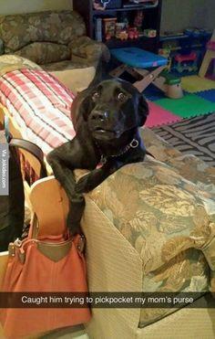 Funny dog snapchat - http://www.jokideo.com/