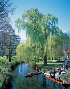 Avon River, Christchurch, New Zealand - Pre Earthquake The Beautiful Country, Beautiful World, Beautiful Places, Rafting, The Places Youll Go, Places To See, Christchurch New Zealand, New Zealand Houses, New Zealand South Island